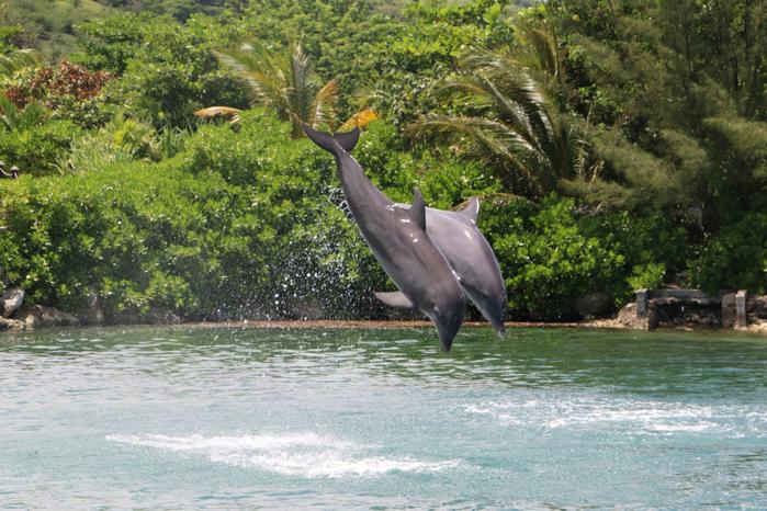 dolphin_cove-1024x683 (700x466, 512Kb)