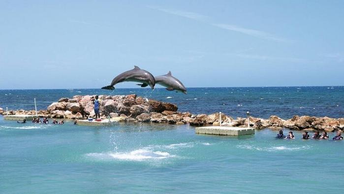 dolphin-cove-jamaica-820x462 (700x394, 215Kb)