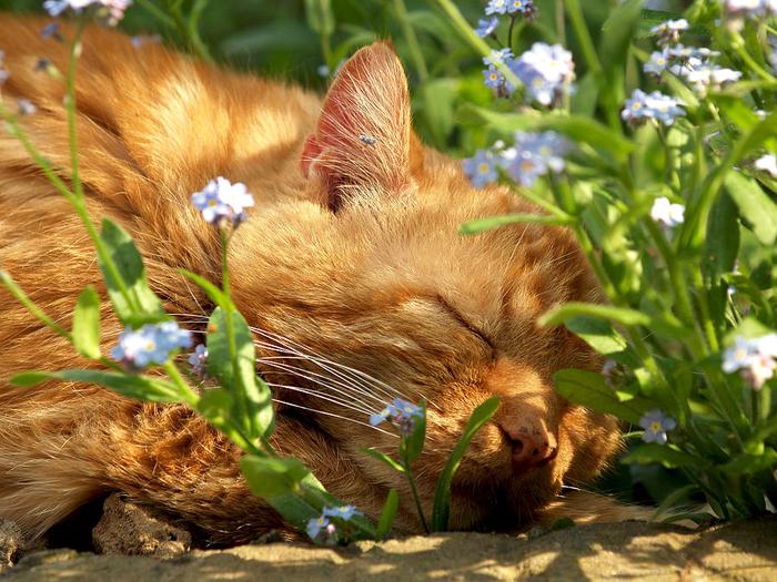 cat-nap-jan-giesen (700x525, 530Kb)