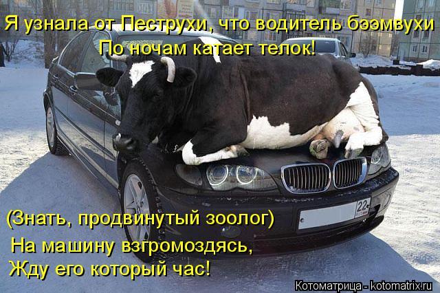 kotomatritsa_3 (640x426, 270Kb)