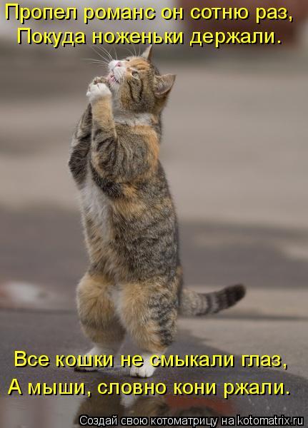 kotomatritsa_E (431x600, 169Kb)