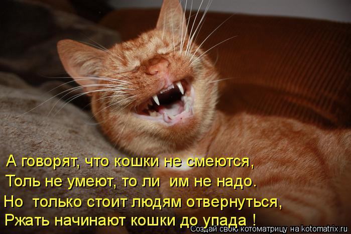 kotomatritsa_Lf (699x466, 264Kb)