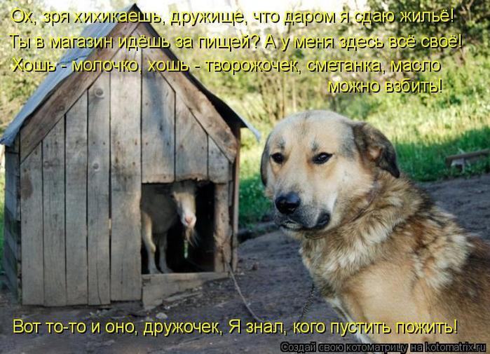 kotomatritsa_r (700x505, 441Kb)