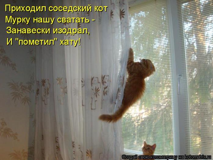 kotomatritsa_T (700x524, 355Kb)