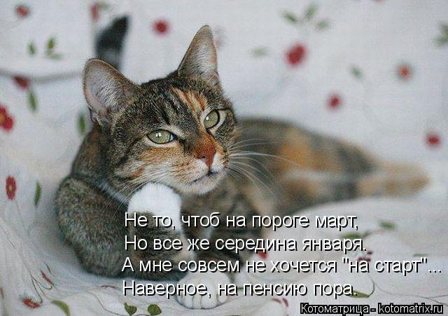 kotomatritsa_J (640x451, 202Kb)