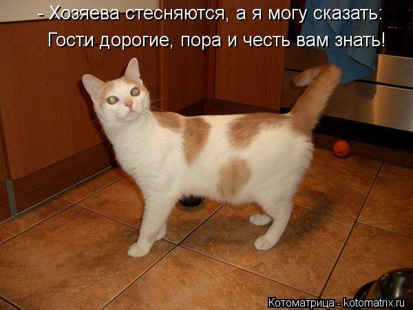 kotomatritsa_N (600x450, 212Kb)