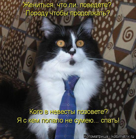 kotomatritsa_xb (550x560, 236Kb)