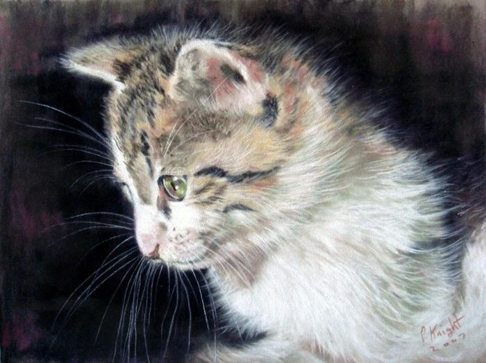 Очаровательные коты английского художника Paul Knight7 (700x523, 378Kb)