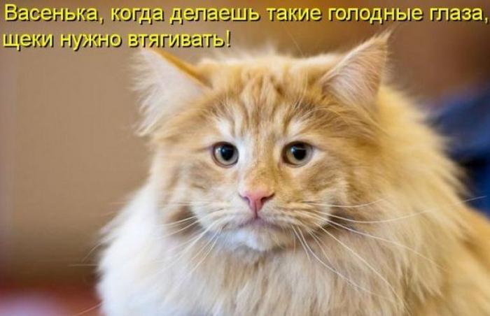 Koshariki-001-768x496 (700x452, 254Kb)
