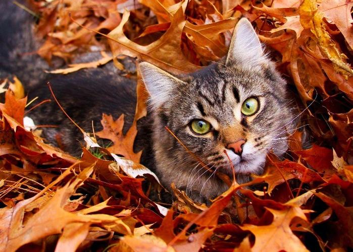 Cat-cats-39947121-1074-768 (700x500, 480Kb)