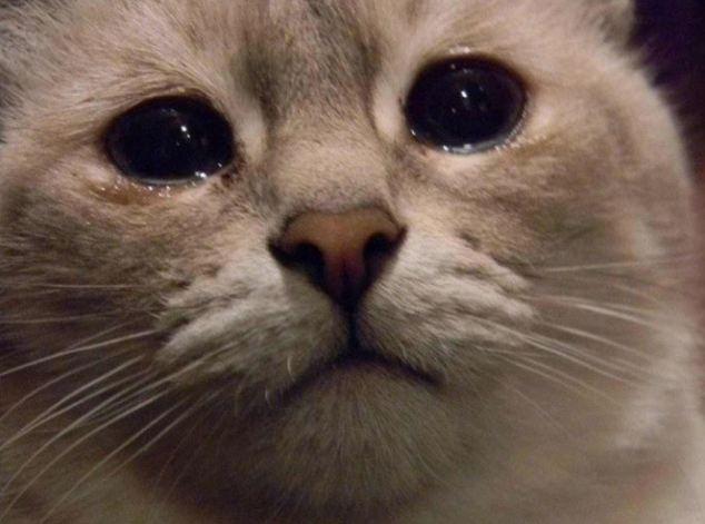 Post para dar hambre Gatos-tristes-5