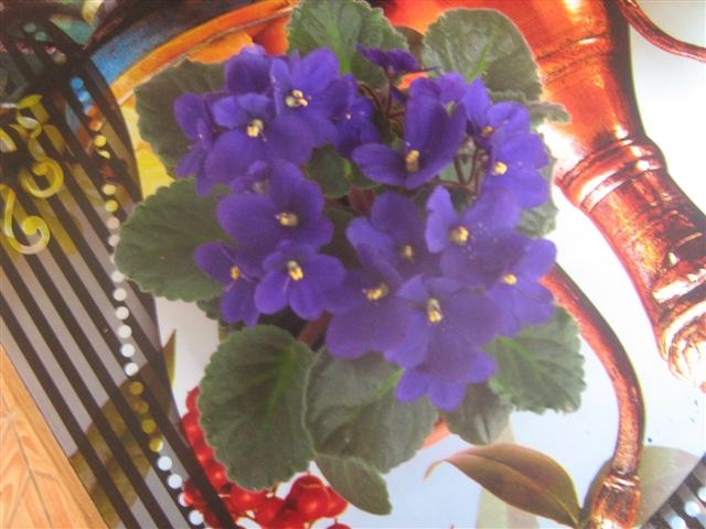 "Мои цветочки ... Занятие для души)))""  9c1f68203034440abe29fc722a756e5e_big"