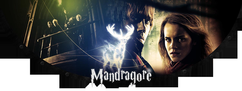La Mandragore