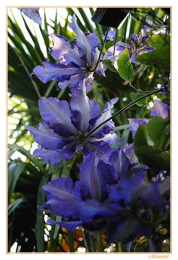 Fleurs de mon jardin série 2  Le-jardin-suite2-012-45f38dd