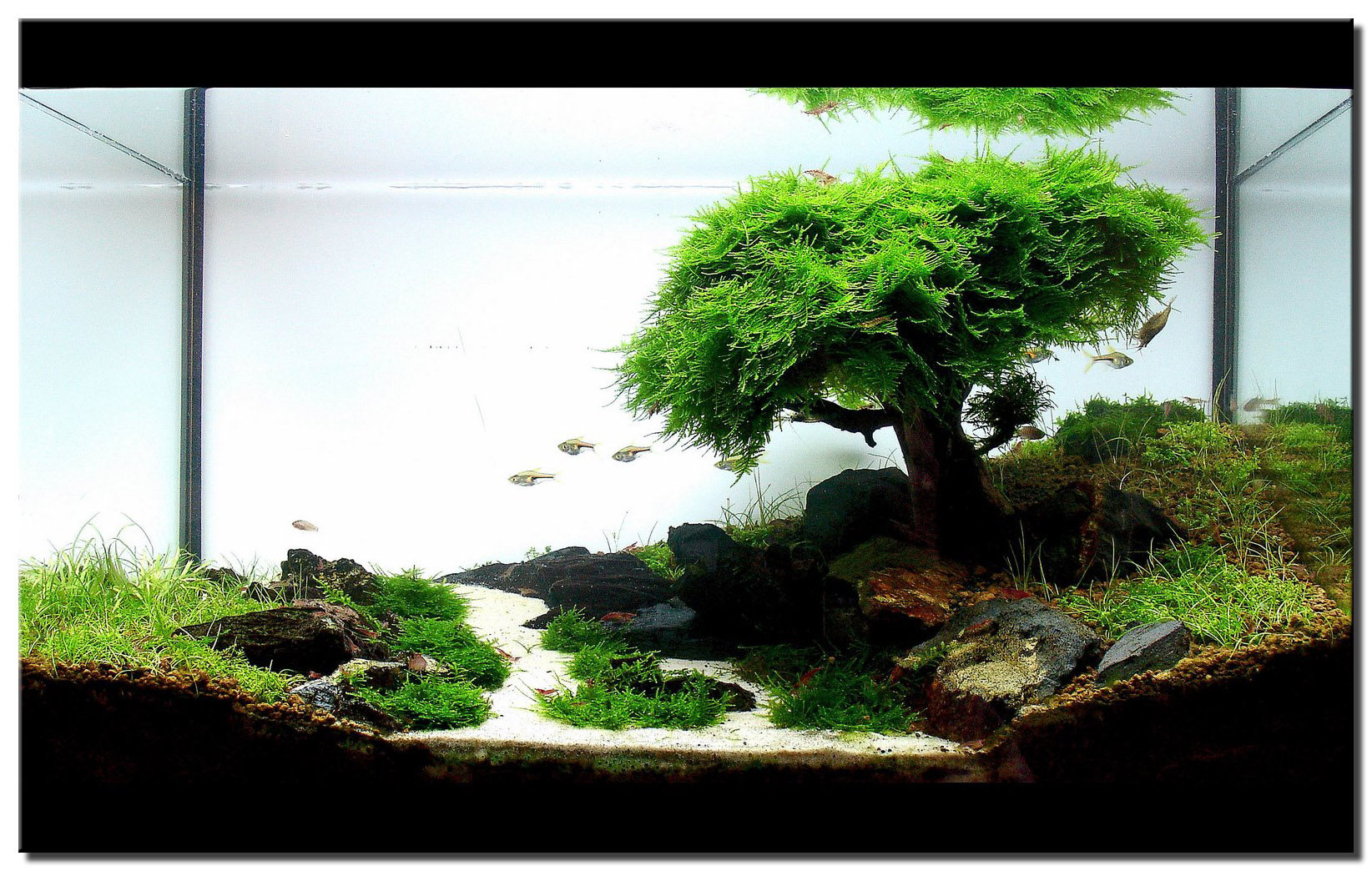 essai aquascape (en rodage)  1_syrah_large-4658a8a