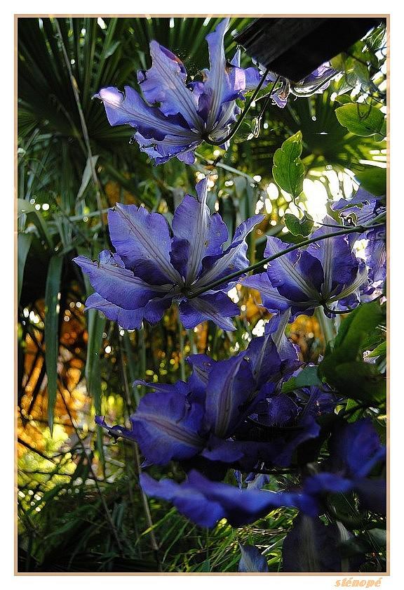 Fleurs de mon jardin série 2  Le-jardin-suite2-009-45f3881