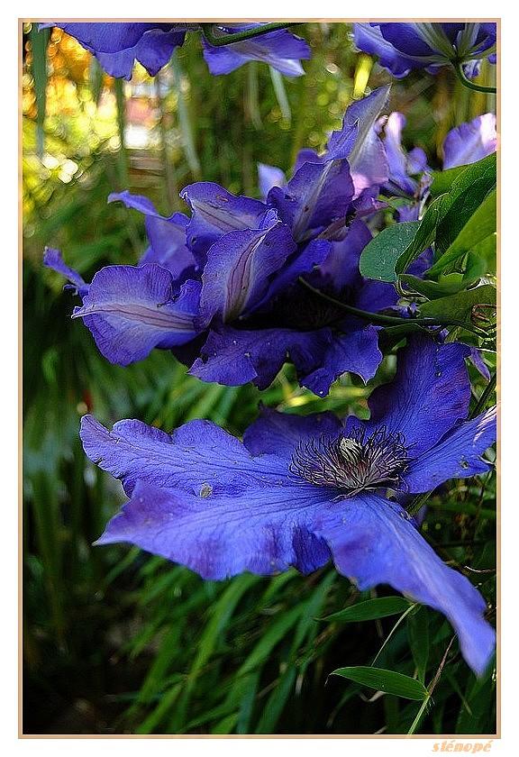 Fleurs de mon jardin série 2  Le-jardin-suite2-010-45f388f