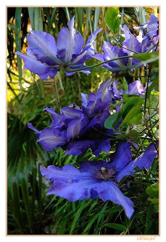 Fleurs de mon jardin série 2  Le-jardin-suite2-011-45f38b7