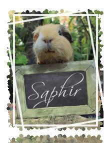 Saphir031