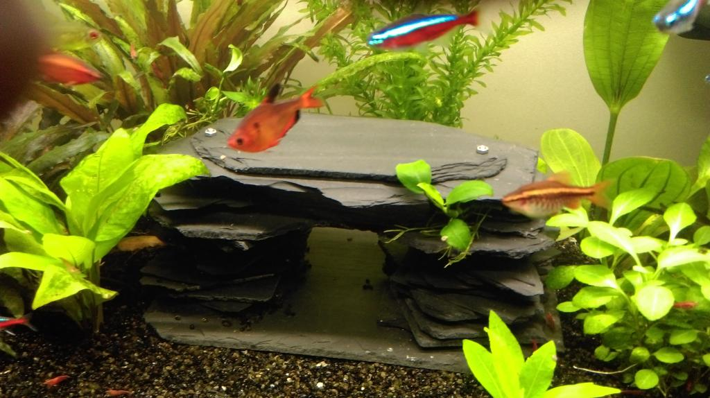 Mon nouveau aquarium Imag0038-min-4da33e2