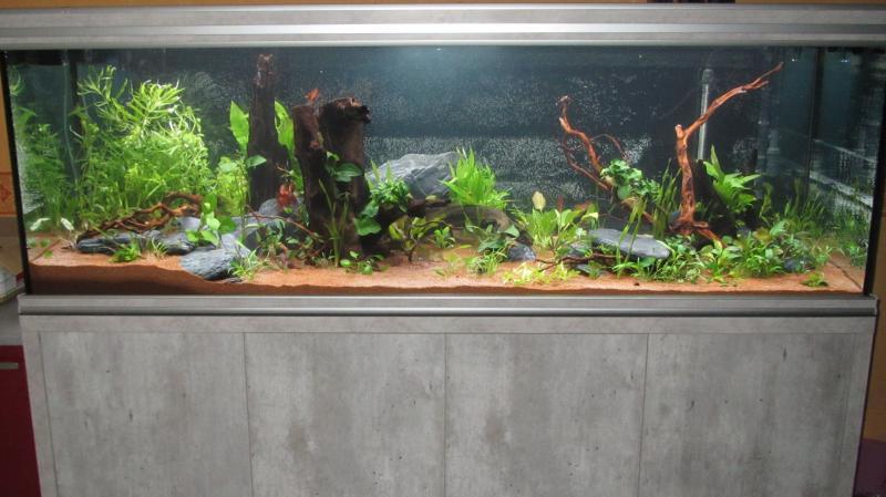 Création nouvel Aquarium amazonien 830 litres  - Page 9 Img_4518-4b9cf73