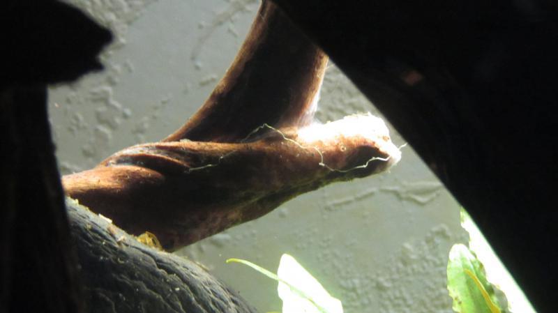 Création nouvel Aquarium amazonien 830 litres  - Page 7 Img_4475-4b758bd