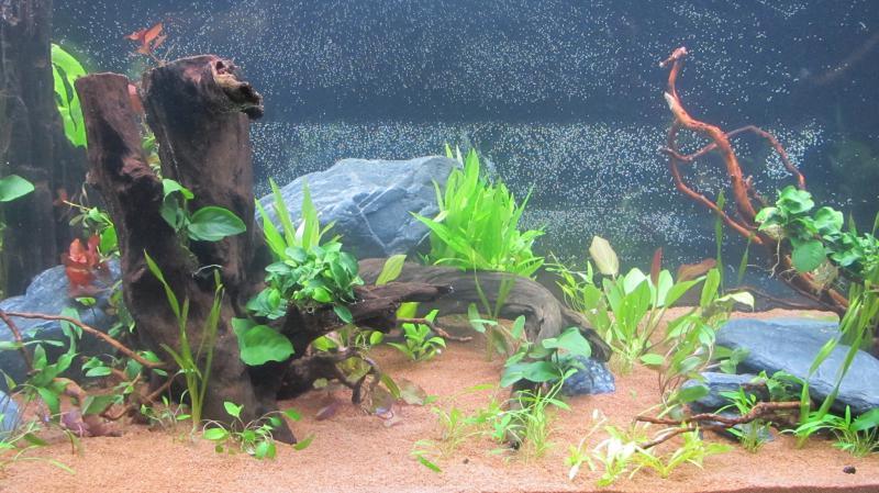 Création nouvel Aquarium amazonien 830 litres  - Page 9 Img_4530-4b9cfa9