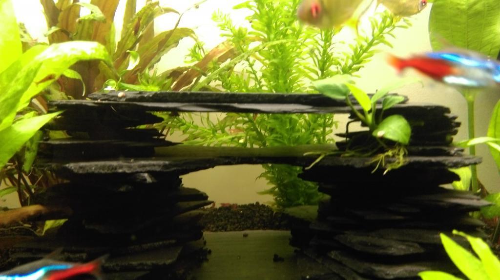 Mon nouveau aquarium Imag0037-min-4da33f2