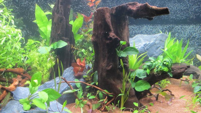Création nouvel Aquarium amazonien 830 litres  - Page 9 Img_4536-4b9cfb8