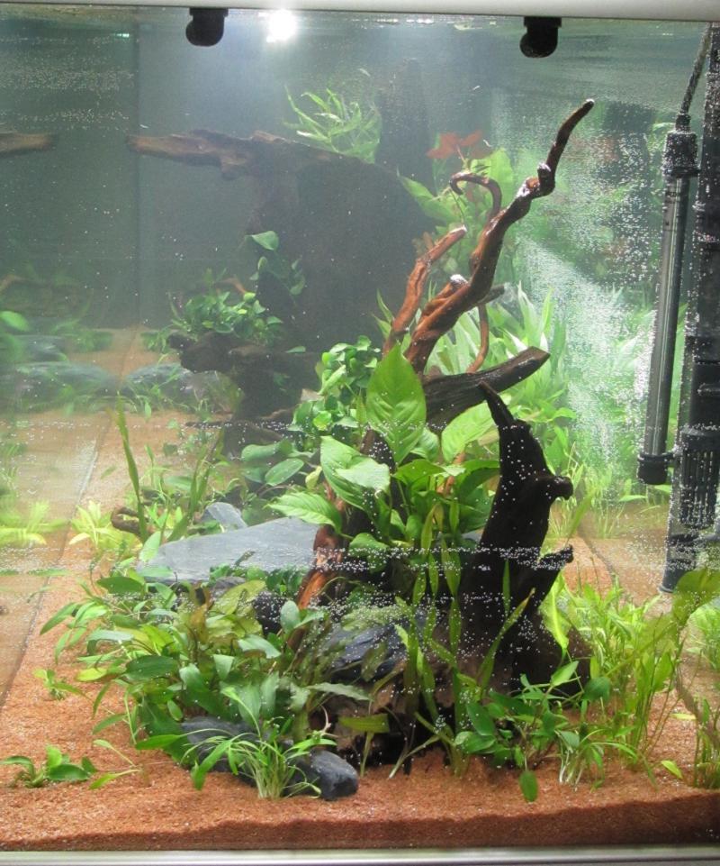 Création nouvel Aquarium amazonien 830 litres  - Page 9 Img_4522-4b9cf81