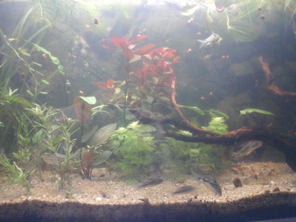 Une vie de Corydoras 20161003_180703-508dcd7