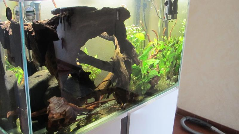 Création nouvel Aquarium amazonien 830 litres  - Page 7 Img_4463-4b758a2