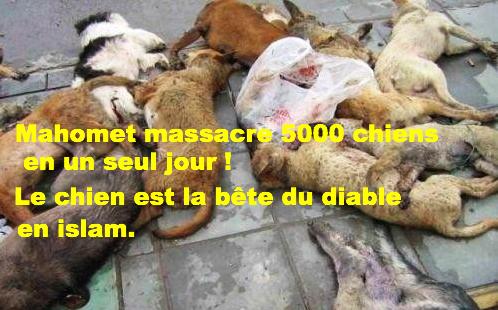 la vie de Muhammad (saw) - Page 4 Abattage-chiens-5638fa4