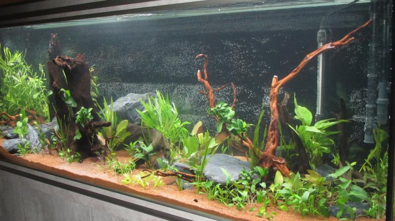 Création nouvel Aquarium amazonien 830 litres  - Page 9 Img_4525-4b9cf95