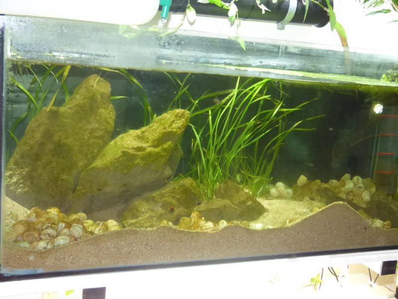 300L Tanga: Multi/cyprichromis - Page 2 P1020419-4c71442