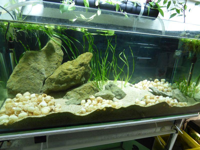 300L Tanga: Multi/cyprichromis - Page 2 P1010790-4c203ea