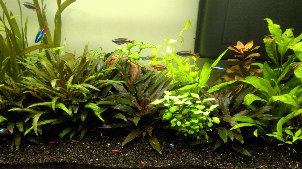 Mon nouveau aquarium Imag0021_1600x896-4d97bd8