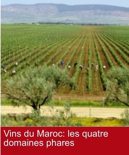 Les pays musulmans fabriquent leurs vins Img_9014-5220a2a