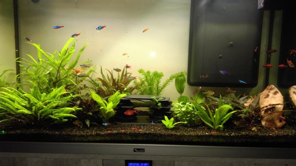 Mon nouveau aquarium Imag0043-min-4da343e
