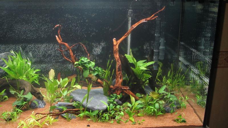 Création nouvel Aquarium amazonien 830 litres  - Page 9 Img_4521-4b9cf7f