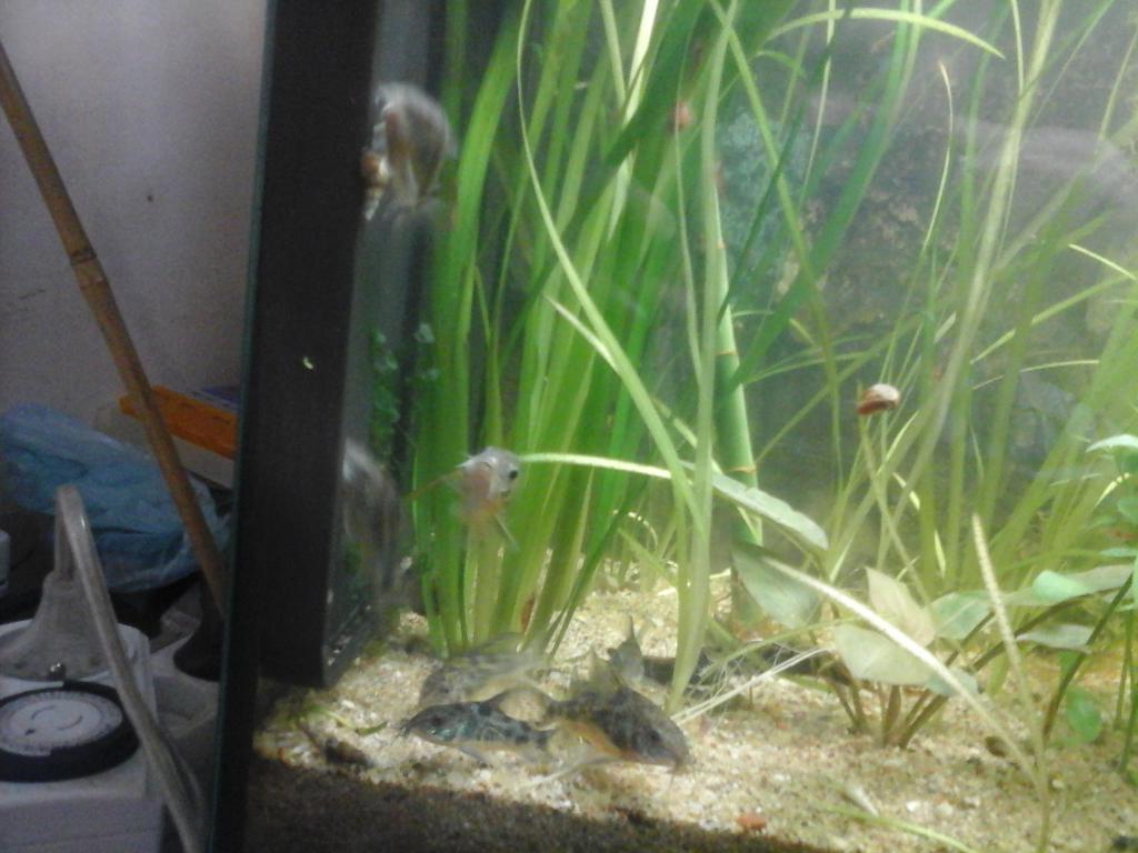 Une vie de Corydoras 20161003_164136-508d9b2
