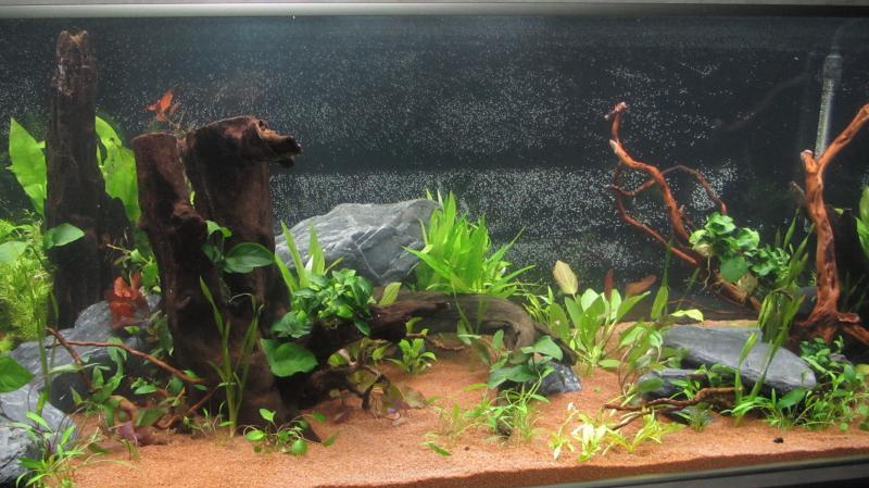 Création nouvel Aquarium amazonien 830 litres  - Page 9 Img_4520-4b9cf7c