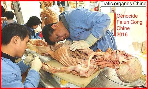 La fin du monde est reportée ,,, - Page 6 Falun-gong-77-genocide-520f570