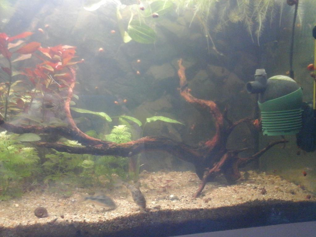 Une vie de Corydoras 20161003_180549-508dcb1