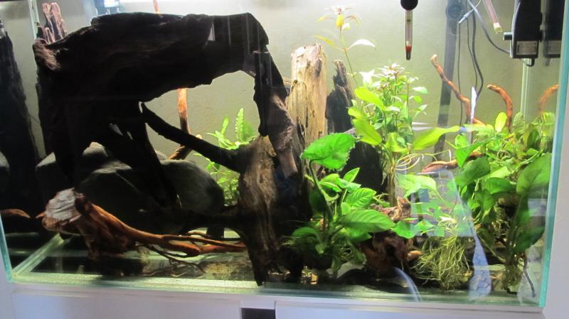 Création nouvel Aquarium amazonien 830 litres  - Page 7 Img_4457-4b75888