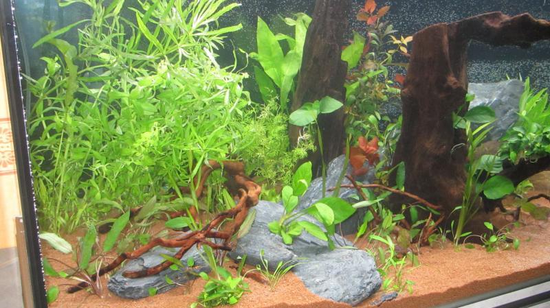 Création nouvel Aquarium amazonien 830 litres  - Page 9 Img_4523-4b9cf8f
