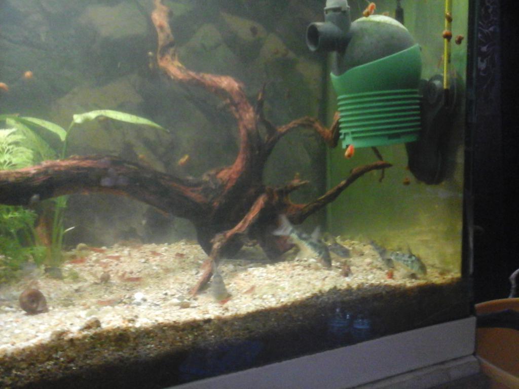 Une vie de Corydoras 20161003_180713-508dce1