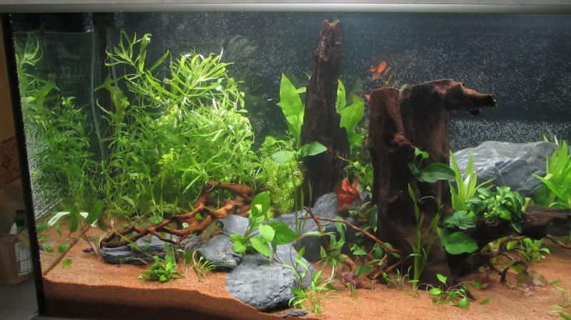 Création nouvel Aquarium amazonien 830 litres  - Page 9 Img_4519-4b9cf78