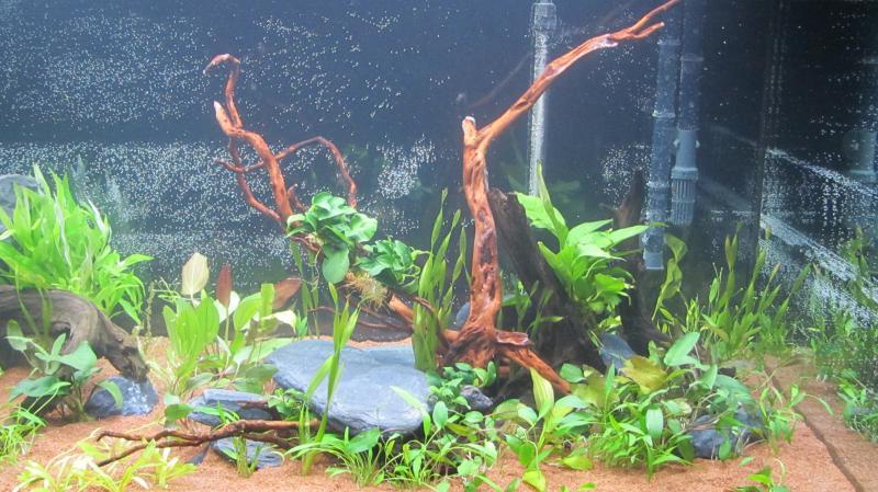 Création nouvel Aquarium amazonien 830 litres  - Page 9 Img_4531-4b9cfab