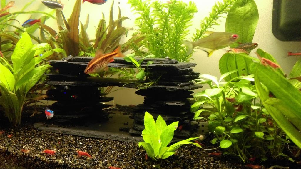 Mon nouveau aquarium Imag0036-min-4da33d2